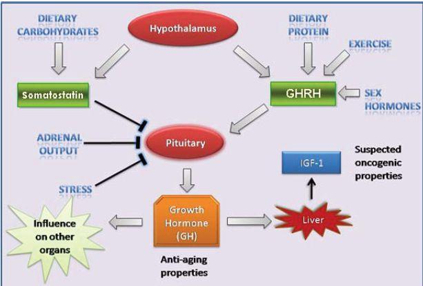 hormone shots